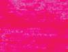 Perky – Bright fuchsia